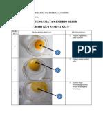 Hasil Pengamatan Embrio Bebek (1-7)