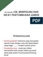 Morfologi, Struktur, Sifat Fisiologis Dan Pertumbuhan Jamur