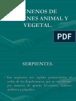 Venenos de orìgen animal y vegetal.ppt