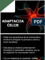Adaptacija_celije