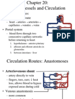 20 Circulatory System