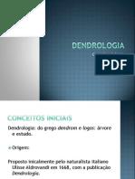 Conceitos iniciais em dendrologia