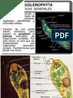 euglenophyta-