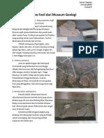 Review Fosil Dari Museum Geologi