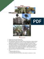 Informacion Palma Datilera