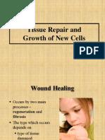 2 Wound Healing