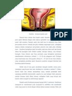 Anatomi Rectum