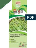 Moringa Oleifera Una Alternativa Forrajera Para Ovinos