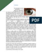 Fundamentacion Teorica Vision