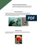 Os Principais Ecossistemas Brasileiros texto.docx
