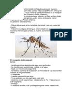El Dengue Es Una Enfermedad Viral Aguda Que Puede Afectar a Personas de Cualquier Edad