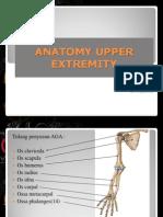Anatomy Upper Extremity