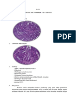 Adenocarcinoma of the Cerviks
