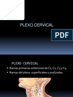 06PLEXOCERVICAL.ppt