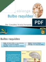 b. Raquídeo.ppt