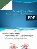 Fisio Morfo 2