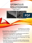Sulfobacillus thermosulfidooxidans