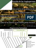 Clase 11 Magnoliidae (2014).pdf