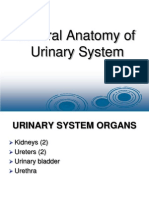 general Urinary System