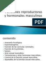 Función Reproductora Masculina