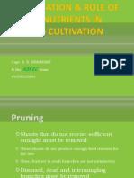 Garden Mango Fertilisation and Role of Micronutrients