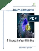 resumen mitosis