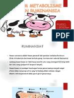 Metabolisme Ruminansia