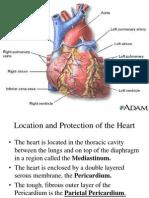 Cardiovascular System
