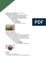 Klasifikasi Pacar Air.doc