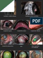 Enfemedades oculares perros Veterinaria