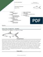 FAO Fisheries & Aquaculture - Cultured Aquatic Species Information Programme - Chanos Chanos (Forsskal, 1775 )