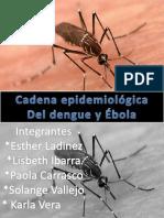 Cadena Epidemiologica Del Dengue - Copia