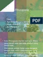 biologi - rhizopoda