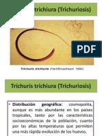 Trichuris trichiura (Trichuriosis)