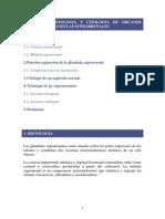 UNIDAD 10-glándulas suprarrenales