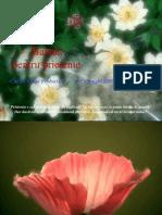 baladapentruprietenie[1].ppt