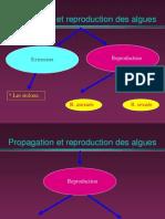 3-cours reproduction algues.ppt