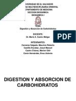 Digestion y Absorcion de Carbohidratos Bioquímica