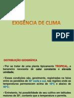 AULA 4  BANANA edafoclimática.ppt
