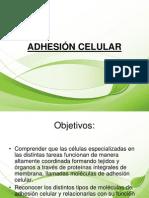 Exposicion Adhesion Celular
