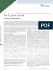 2014NauseefNeutrophils at work.pdf