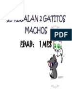 Se Regalan 2 Gatitos Machos
