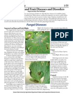 Tomato Fruit Diseases Disorders