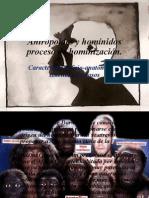 Antropoides y homínidos