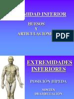 3.1 Miembro Inferior Huesos y Articulaciones-1