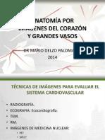 1.- Corazón y Grandes Vasos - Dr. Mario Delzo Palomares