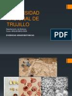 2da Evidencia Arqueobotanica