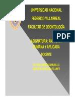 1.- GENERALIDADES ANATOMÍA
