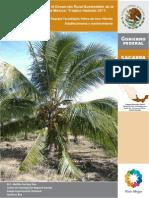 Palma Coco Establecimiento Hibrido