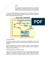 Ciclo Geologico Del Fosforo